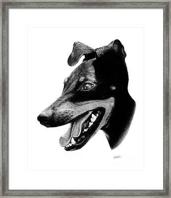 Manchester Terrier Framed Print by Stuart Attwell