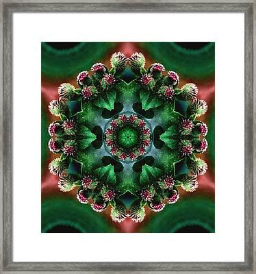 Mandala Bull Thistle Framed Print by Nancy Griswold