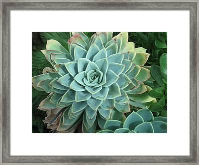 Mandala Framed Print