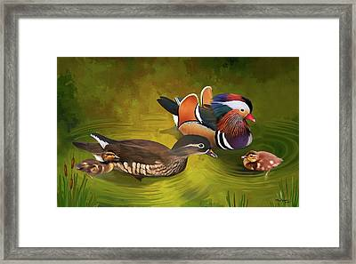 Mandarin Duck Family Framed Print