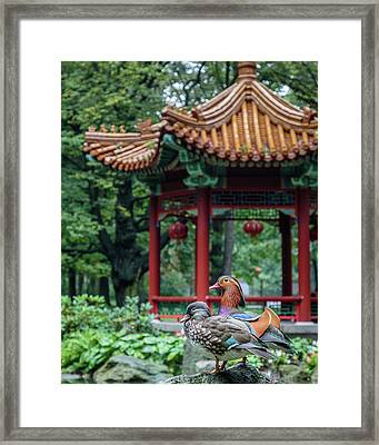 Mandarin Ducks At Pavilion Framed Print