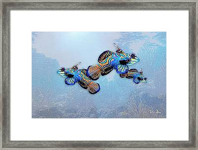 Mandarin Gobies Framed Print