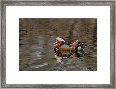 Mandarin Framed Print