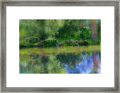 Mandarins And Branch Artistic. Framed Print by Leif Sohlman