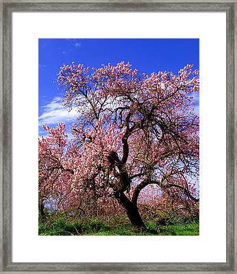 Mandelbaum Framed Print