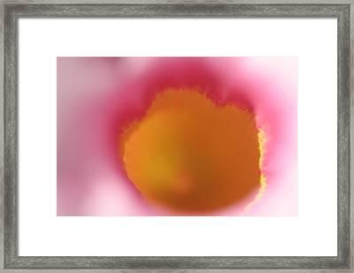 Mandevilla Throat Framed Print