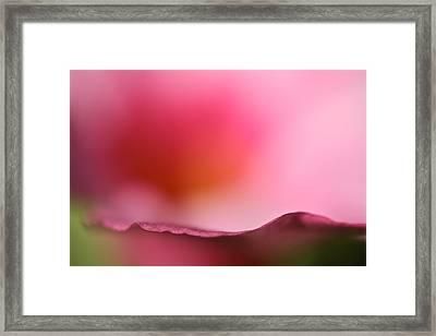 Mandevilla Wave Framed Print