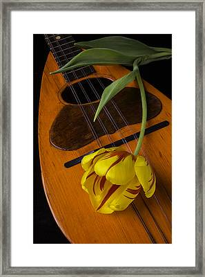 Mandolin With Red And Yellow Tulip Framed Print