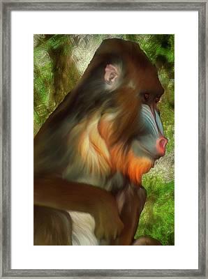 Mandrill 2 Framed Print by Jack Zulli