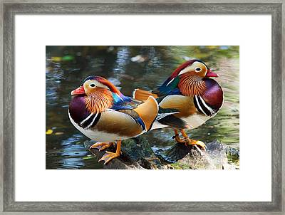 Mandarin Double Shot Framed Print