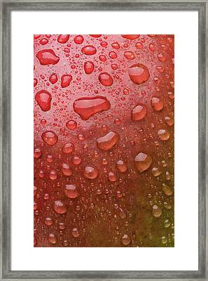 Mango Skin Framed Print by Steve Gadomski
