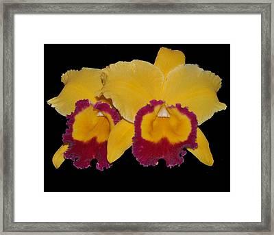 Mango Tango Framed Print by Vijay Sharon Govender