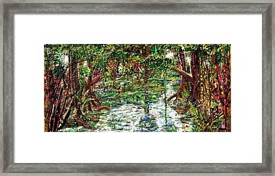 Mangroove Framed Print by Samuel Miller