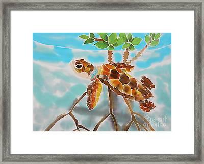 Mangrove Baby Turtle Framed Print
