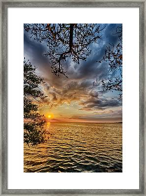 Mangrove Embrace Framed Print