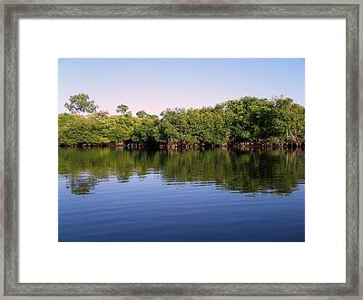 Mangrove Forest Framed Print by Steven Scott