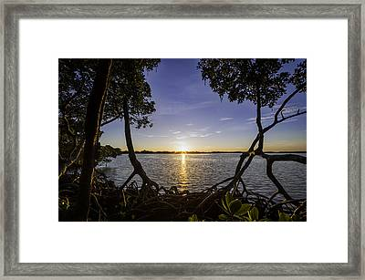 Mangrove Frame Framed Print by Nick  Shirghio