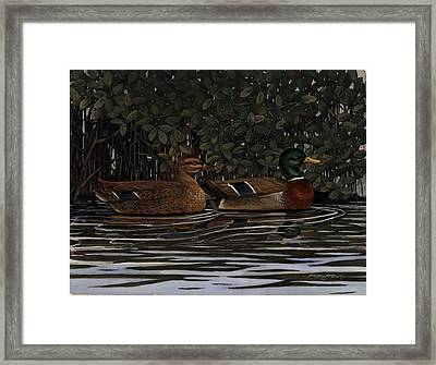 Mangrove Mallards Framed Print by Timothy Tron
