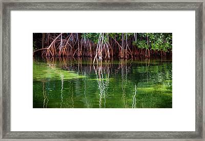 Mangrove Reflections Framed Print