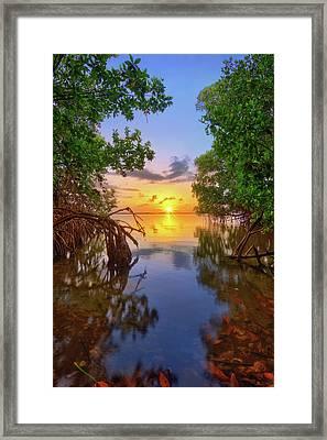 Mangrove Sunset From Jensen Beach Florida Framed Print by Justin Kelefas