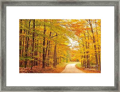 Manisee National Forest In Autumn Framed Print