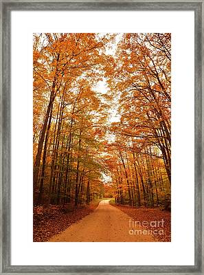 Manistee National Forest Hideaway Framed Print by Terri Gostola