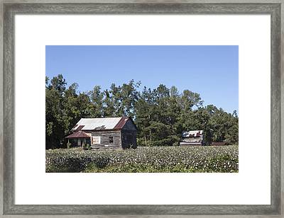 Manning Cotton Field With Barns Framed Print by Suzanne Gaff
