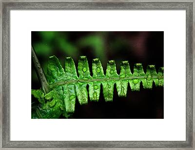 Manoa Fern Framed Print by Jennifer Bright