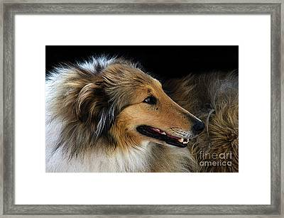 Framed Print featuring the photograph Man's Best Friend by Bob Christopher
