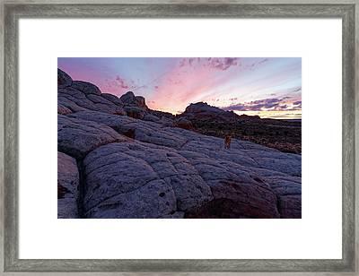 Man's Best Friend Sunset Framed Print by Jonathan Davison