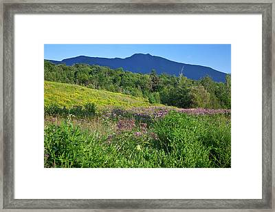 Mansfield Meadow Framed Print by Susan Cole Kelly