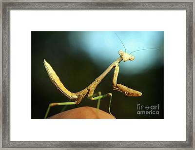 Framed Print featuring the photograph Mantid by DiDi Higginbotham