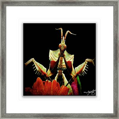 Mantis 27 Framed Print by Ingrid Smith-Johnsen