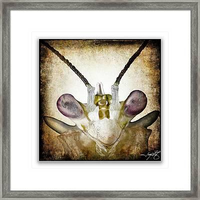 Mantis 3 Framed Print
