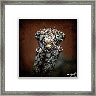 Mantis 31 Framed Print by Ingrid Smith-Johnsen