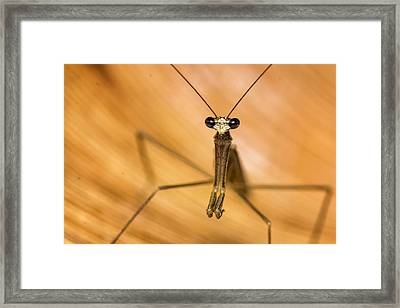 Mantis Framed Print by Clement Faria