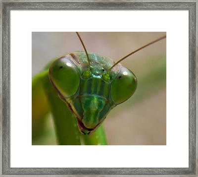 Mantis Face Framed Print by Jonny D