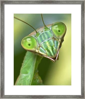Mantis Hello Framed Print