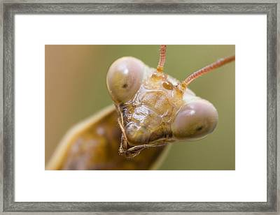 Mantis Portrait Framed Print by Andre Goncalves