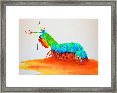 Mantis Shrimp Framed Print