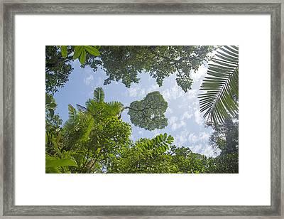 Manuel Antonio Jungle Framed Print by Betsy Knapp