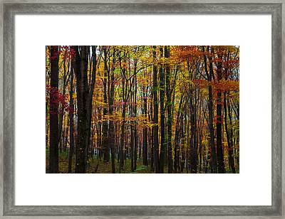 Many Colors Of Autumn Framed Print by April Reppucci