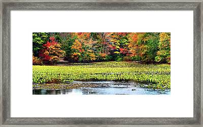 Many Colors Of Autumn Framed Print