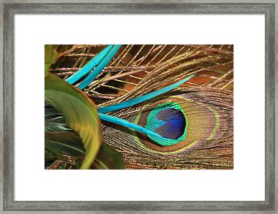 Many Feathers Framed Print