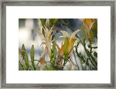 Many Flowers Framed Print