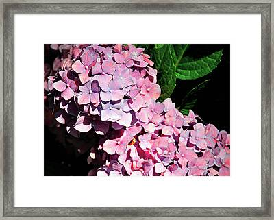 Many Petals Framed Print by JAMART Photography