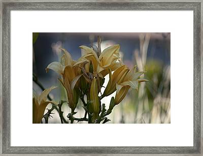 Many Yellow Flowers Framed Print