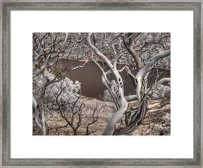 Manzanita Hetch Hetchy Framed Print by Jane Linders