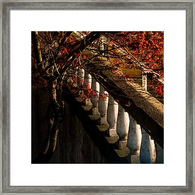 Maple And Concrete Framed Print