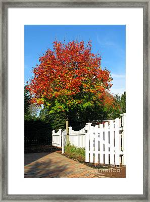 Maple And Picket Fence Framed Print by Olivier Le Queinec